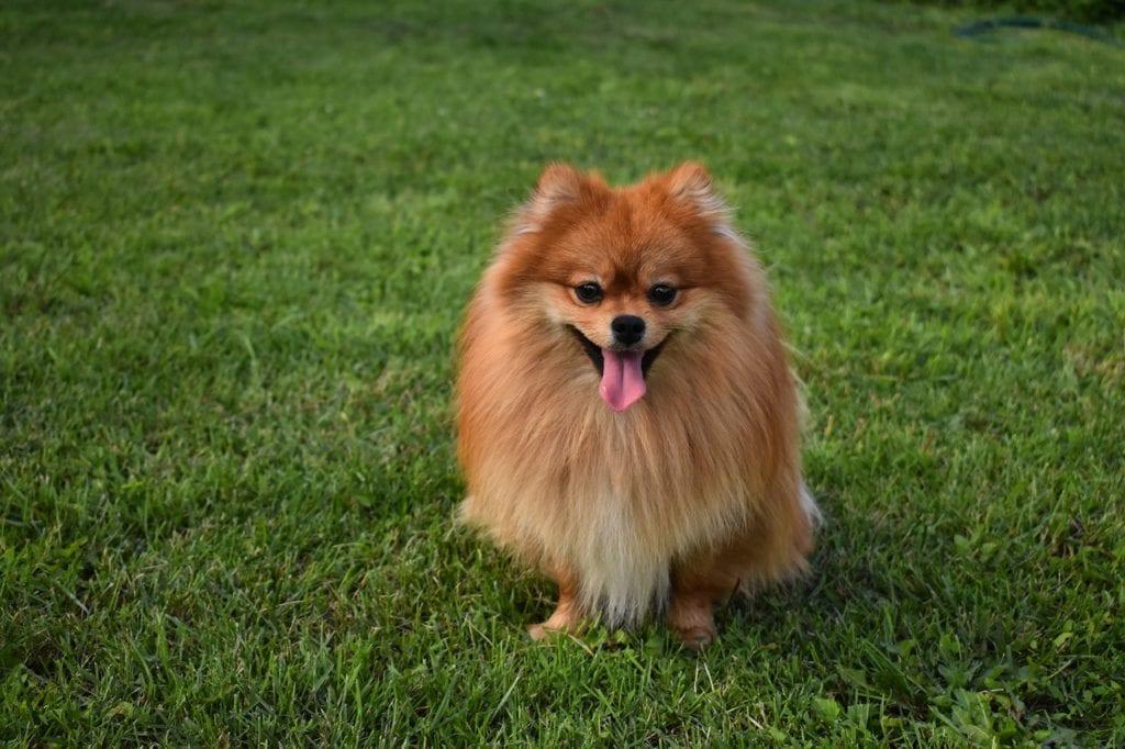 Adopting an adult dog