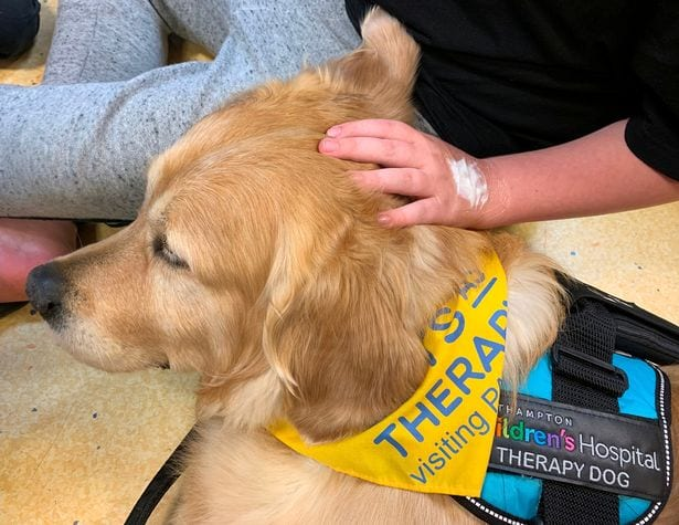 leo-therapy-dog-at-hospital