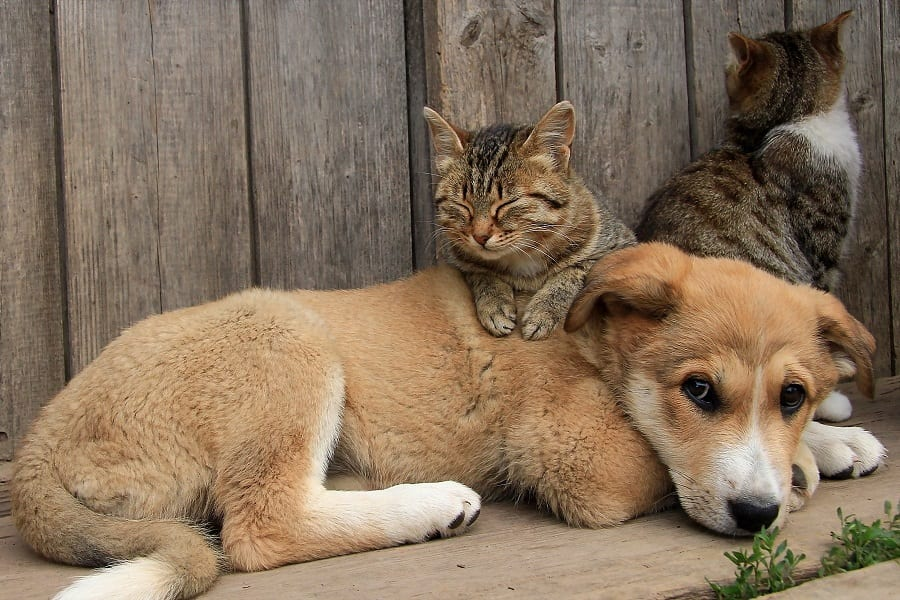 5 Incredible Stories About Dogs And Cats