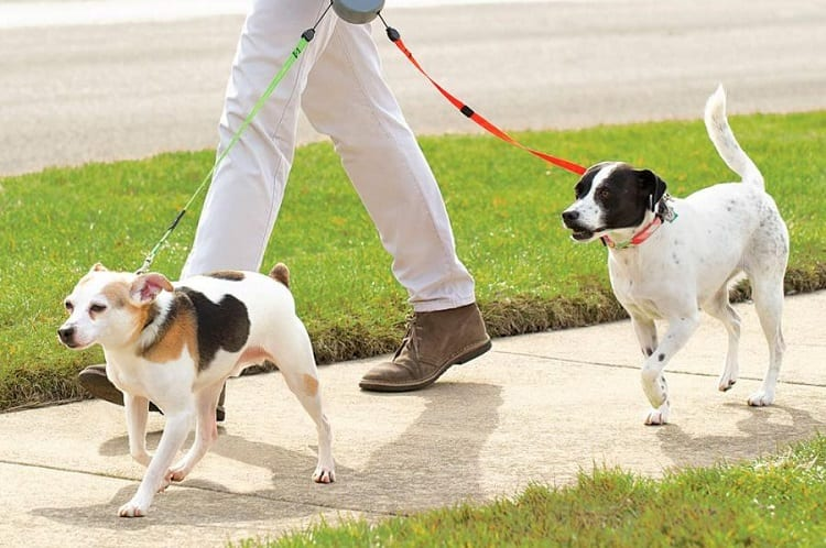 What Are The Pros And Cons Of Retractable Leashes?