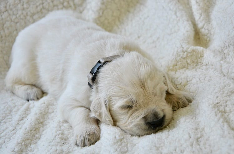 Sleeping Tips For Fussy Puppies