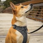 Best No Pull Harness for Your Pup