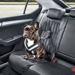 Best Dog Seat Belt: Keep Your Dog And Car Safe