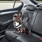 Best Dog Seat Belt: Keep Your Dog And Car Safe