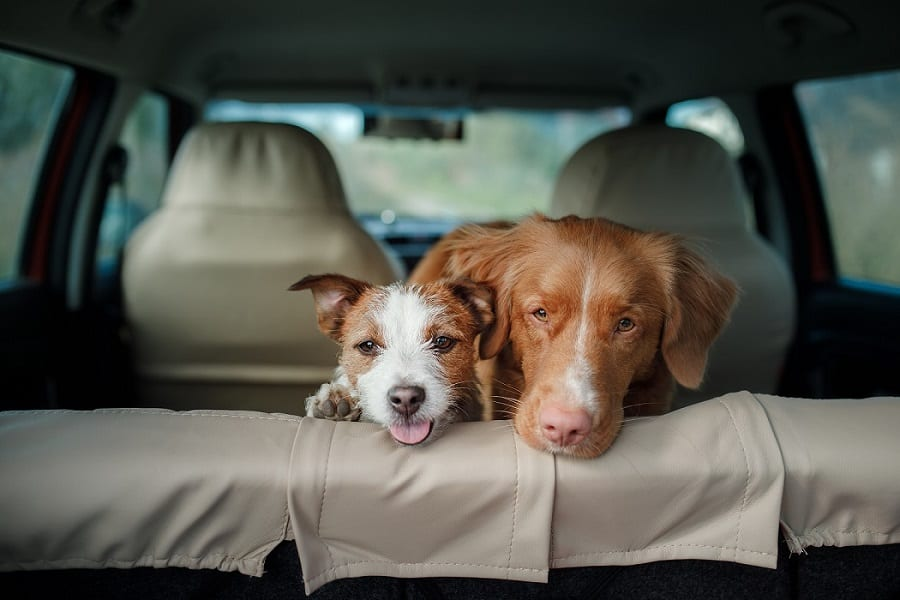 What To Do When Your Dog Is Car Sick