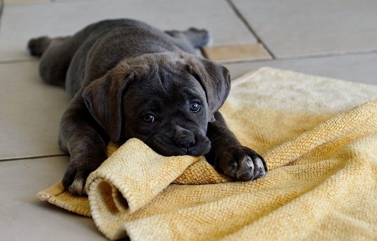 biting floor rug