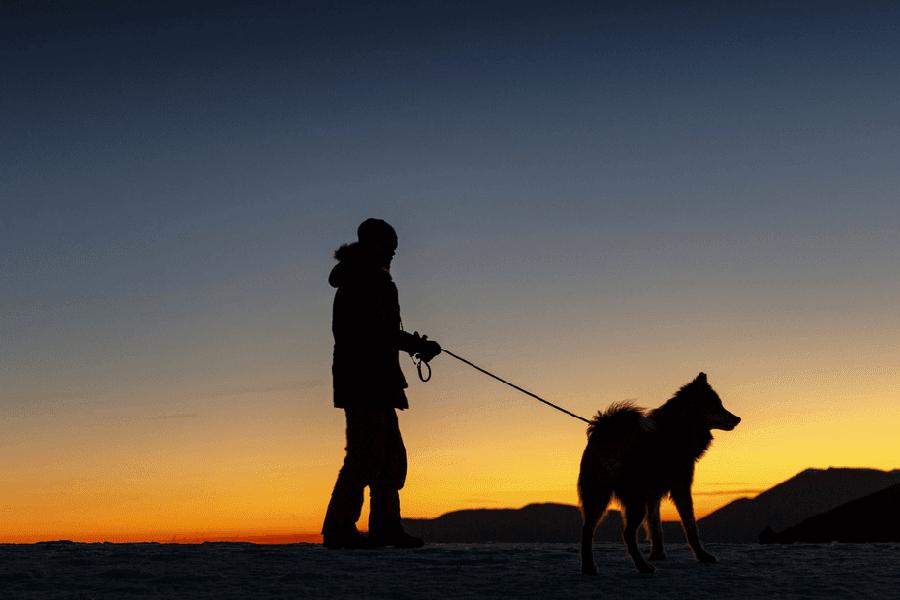 walking dog at cold night