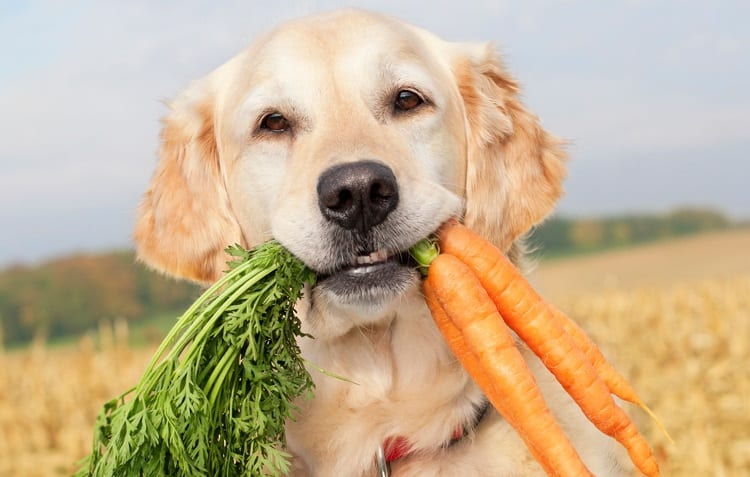 what vegetables can dog eat