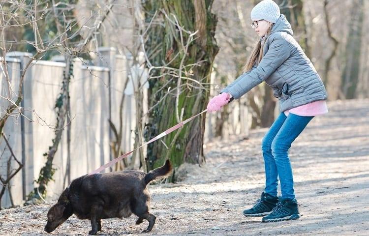 dog that pulls leash