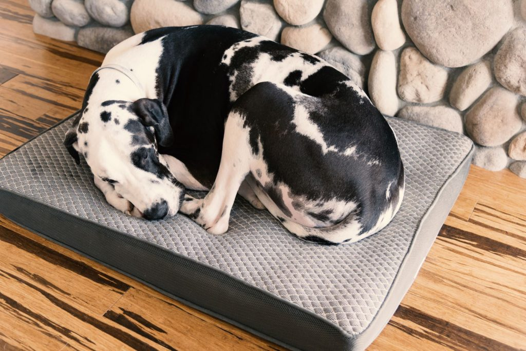 Best Bed For Great Dane