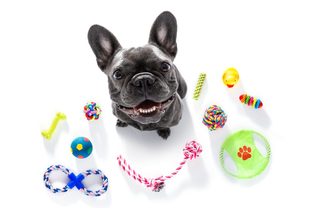 Best Toys for French Bulldogs e1609252303831
