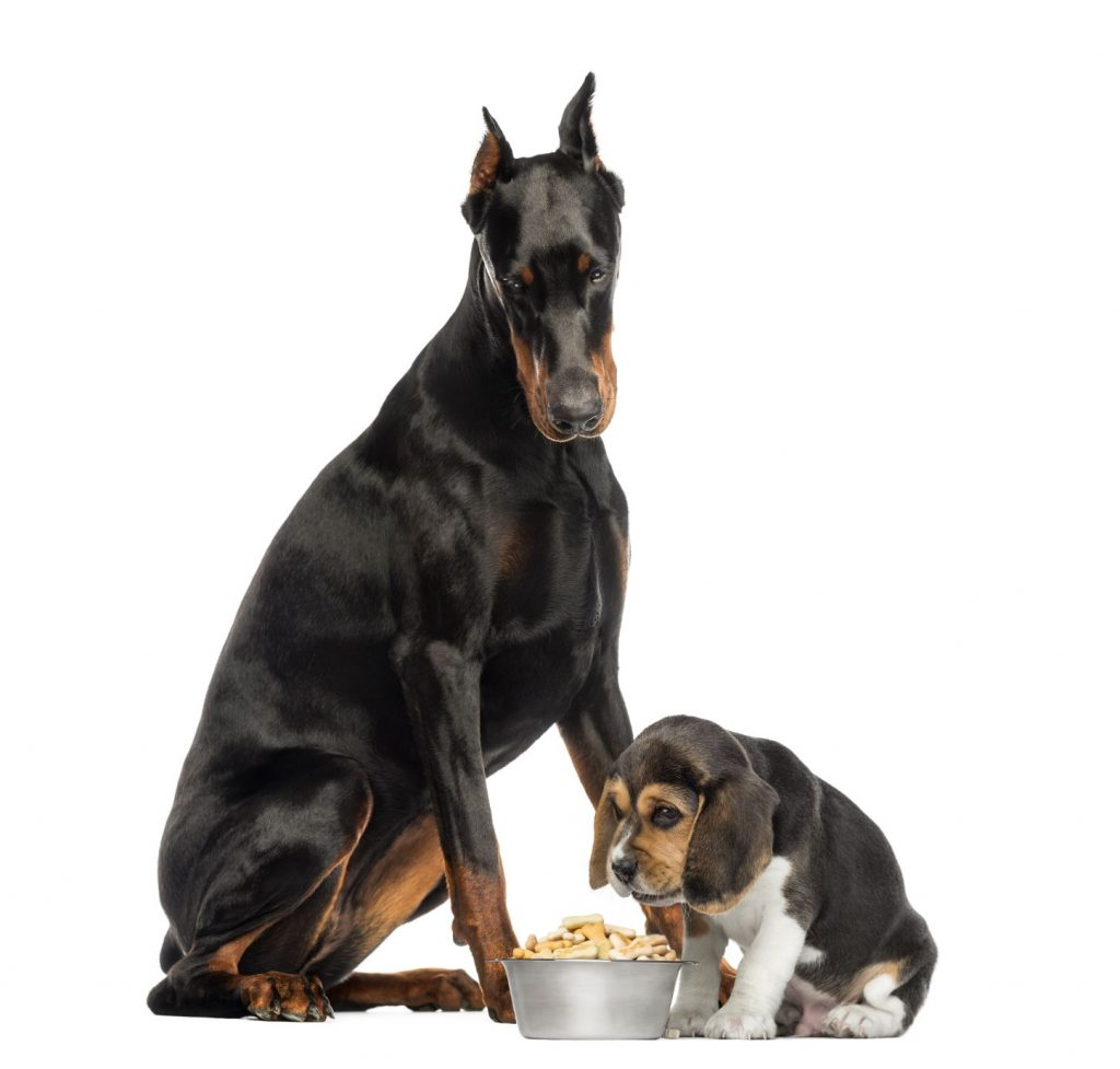 Can Adult Dogs Eat Puppy Food?