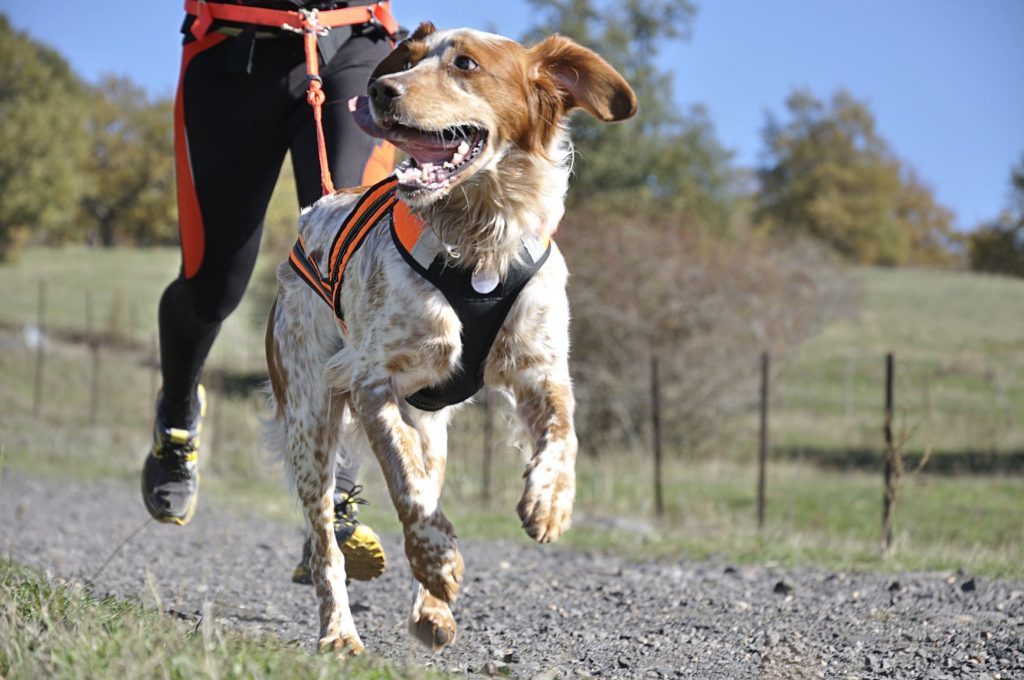 Best Escape-Proof Dog Harness