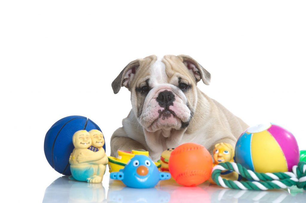 Best Toys For Bulldogs