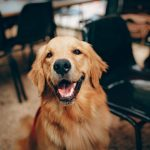 How Long Can A Dog Remember A Person?
