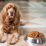 How Long Can A Dog Survive Without Food?