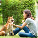 Are Shiba Inus Easy to Train?