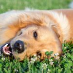 Dog Allergies – Symptoms, Causes, Prevention, Relief