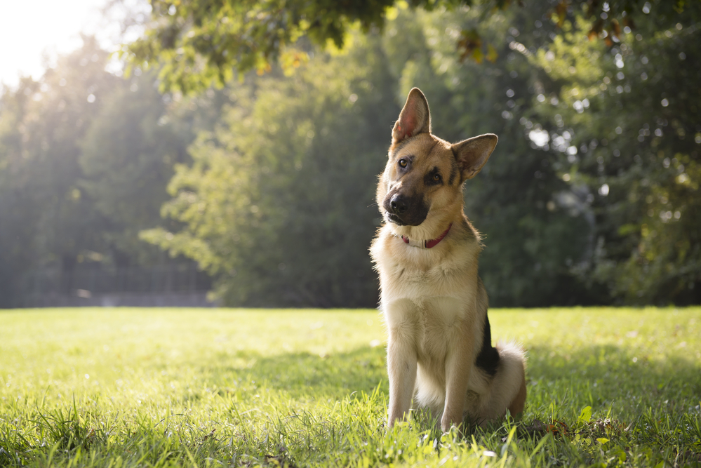 Is your dog neurotic Understanding dealing with and helping neurotic dogs